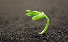 planta_saliendo_de_una_semilla-wide